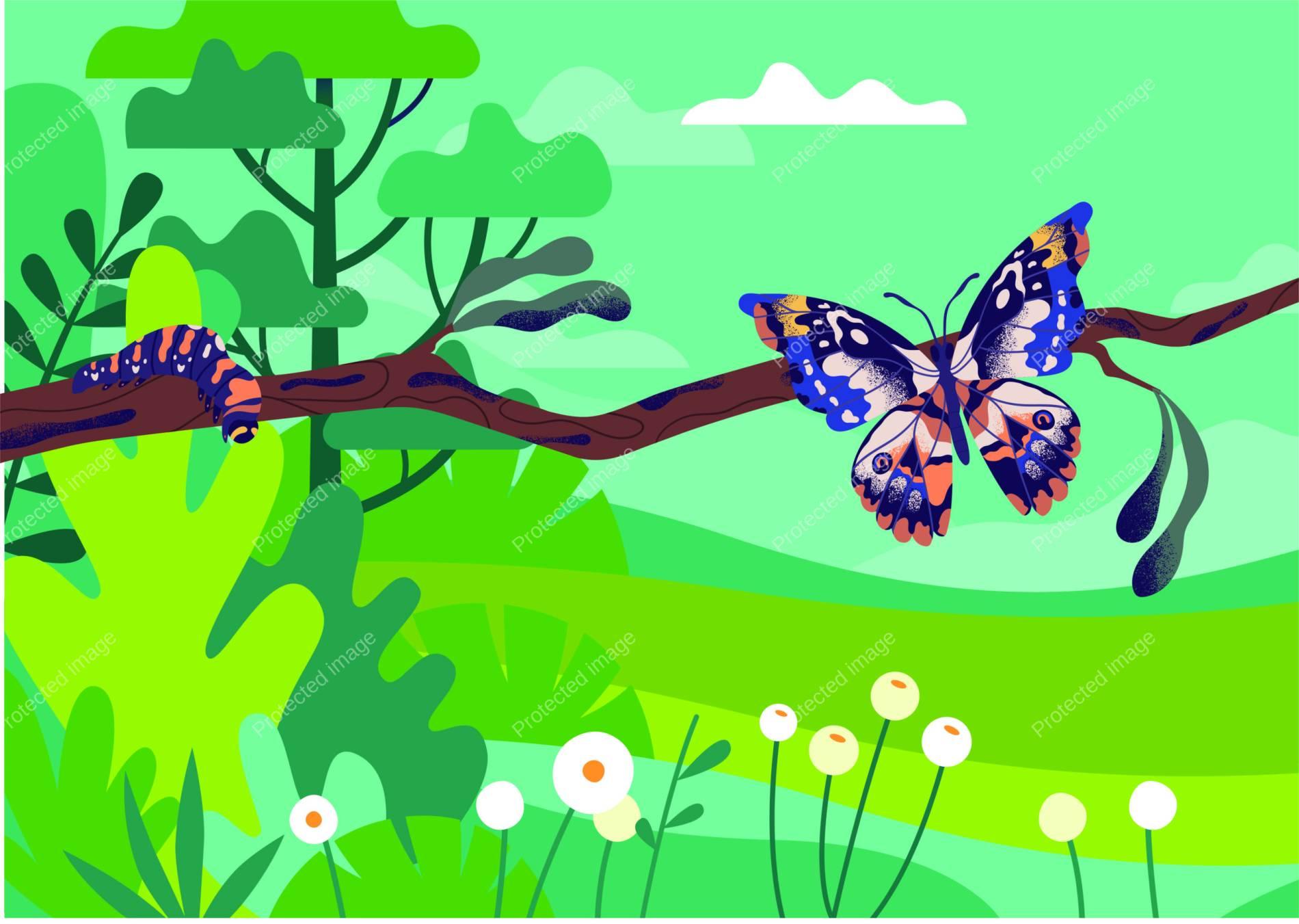Butterfly | Thomas Strandsebø